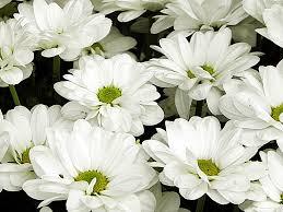 białe kwiaty.jpg