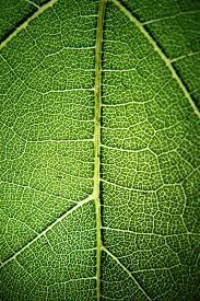 zielone nuty.jpg